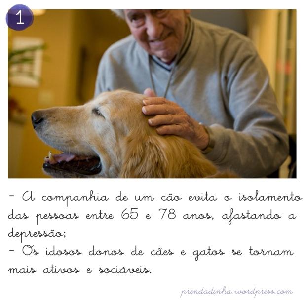 cachorro_companheiro_idoso